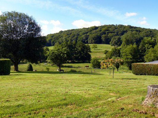 草坪与树林绿色植被