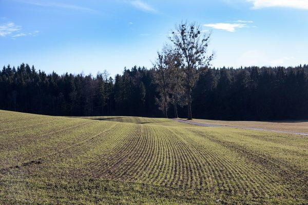 春天的耕地