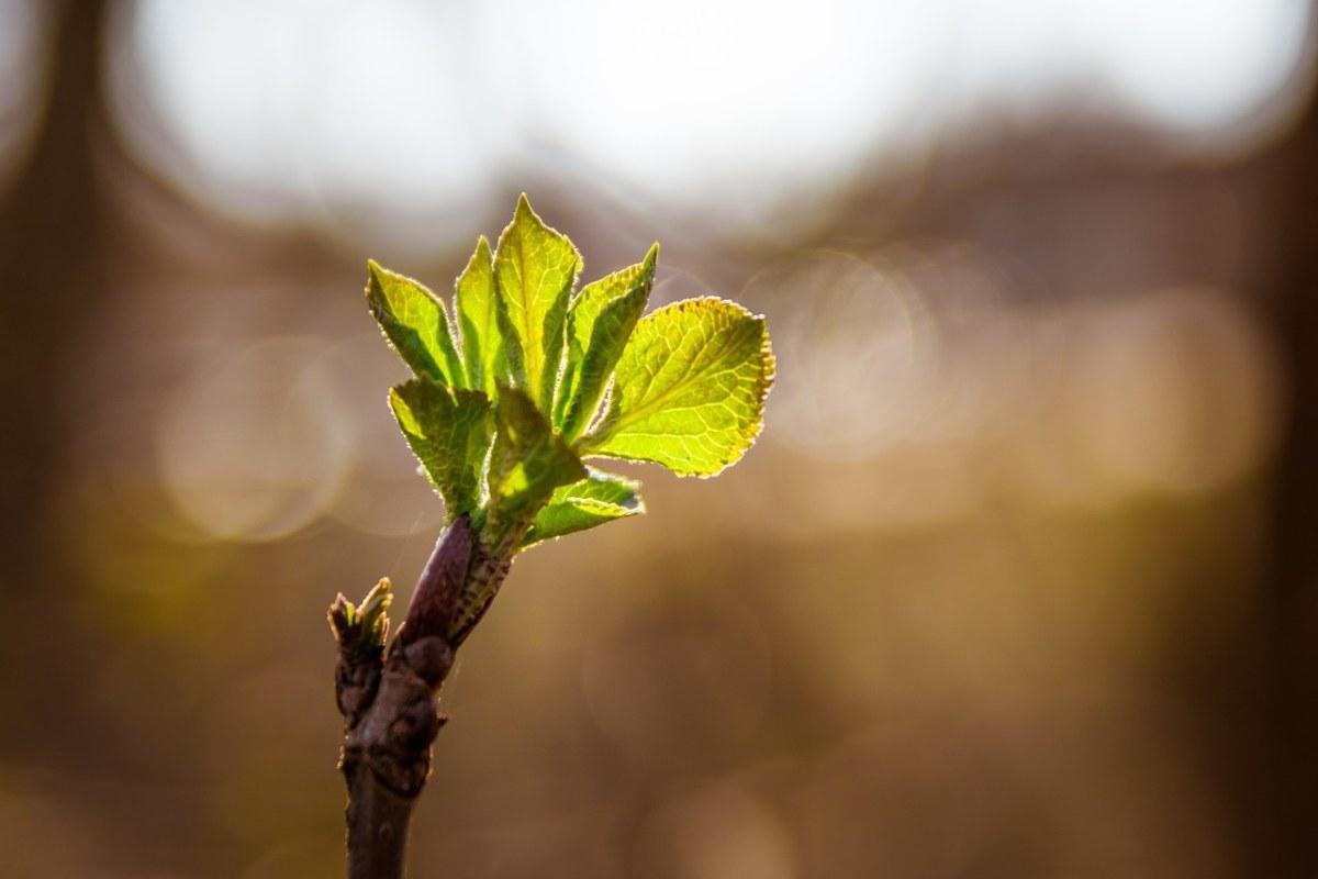 春天的植物嫩叶