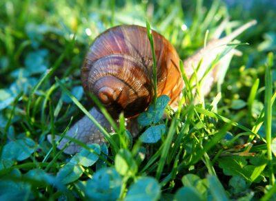 阳光下的蜗牛