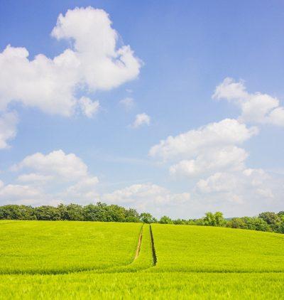 绿色的农业风光