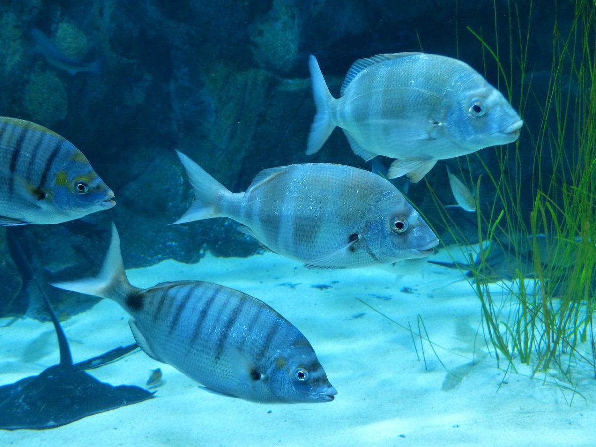 水族馆的观赏鱼类