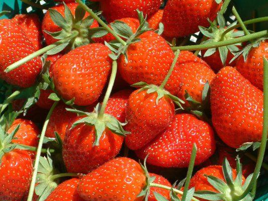 水果、草莓、红色