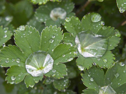 绿叶上的水珠