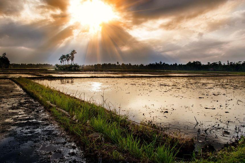 阳光下的农田