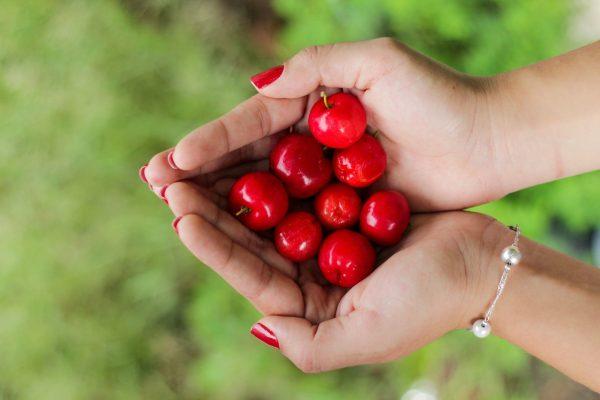 双手捧着樱桃