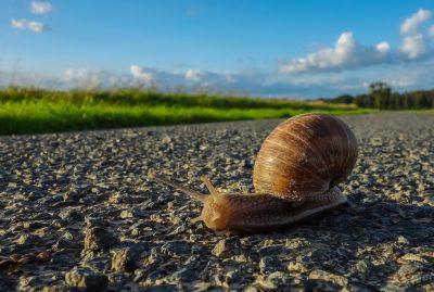 公路路面慢慢地爬行的蜗牛
