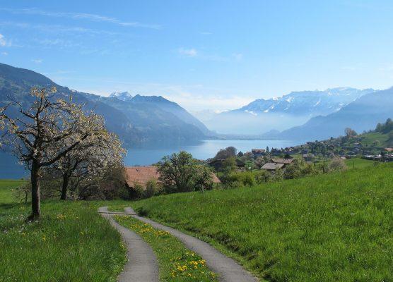 湖边的村庄与草地春天风景