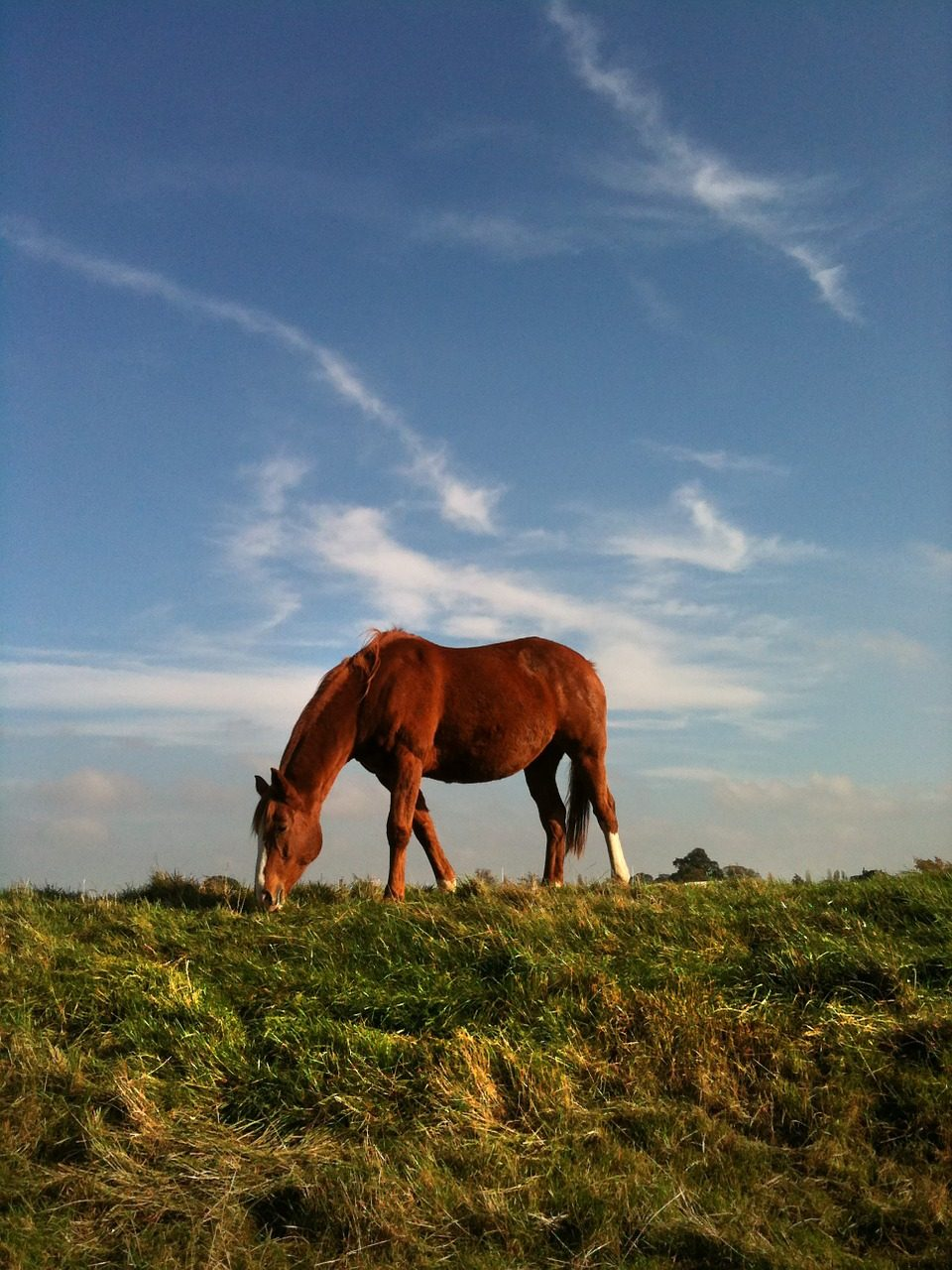 草原上放牧的骏马