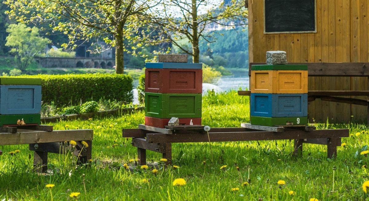 草地上的蜜蜂蜂箱