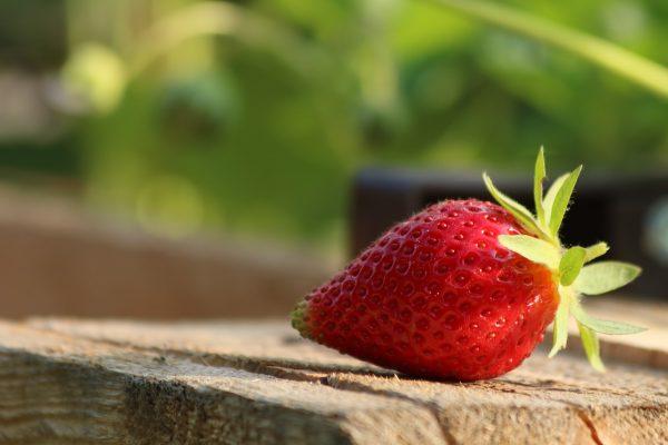 草莓、成熟、水果