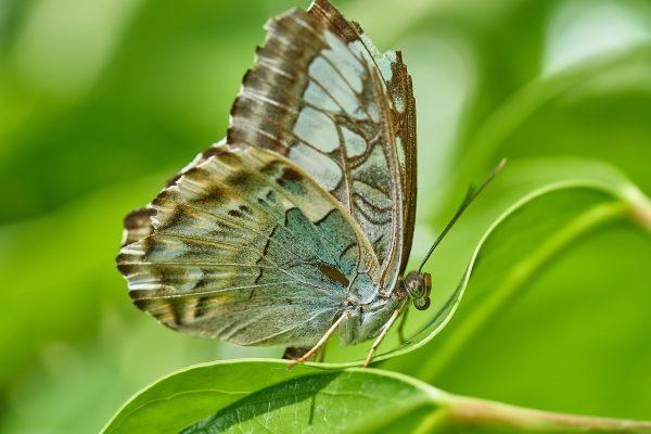 蝴蝶与绿叶图片