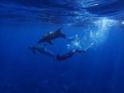 水下的潜水员与海豚