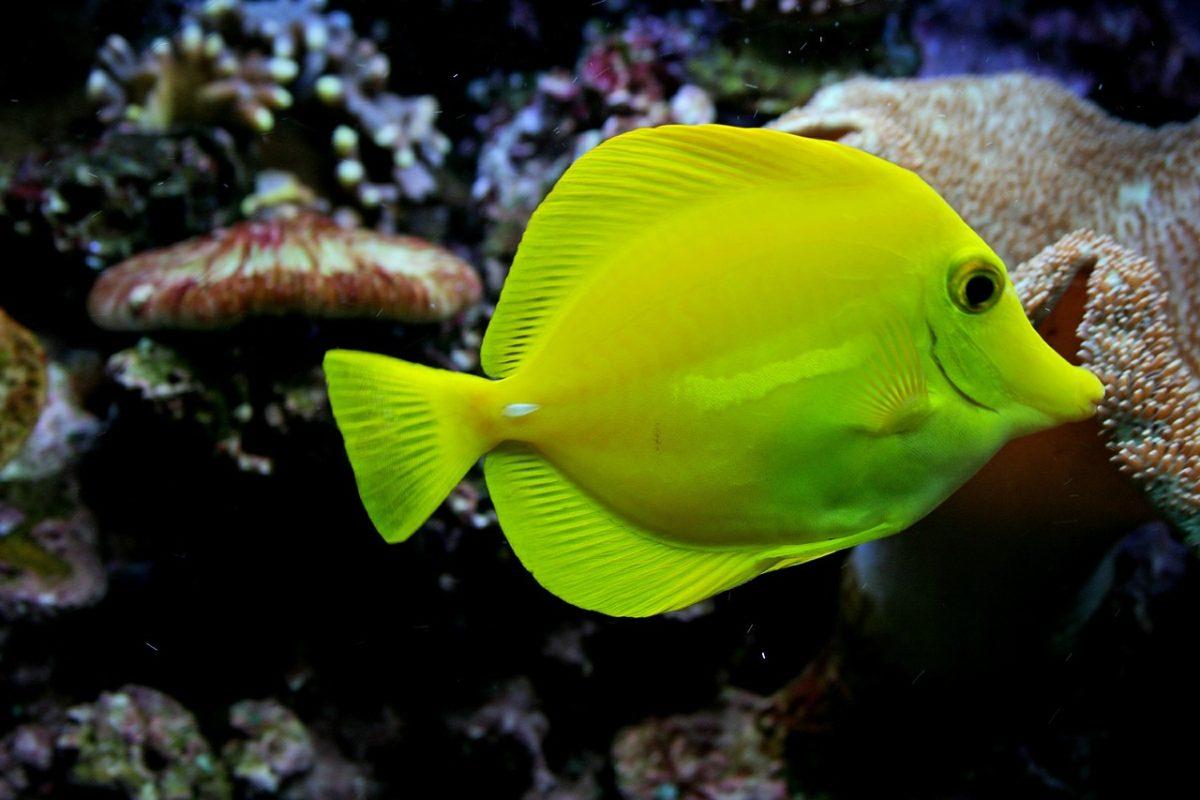 水族馆的观赏鱼