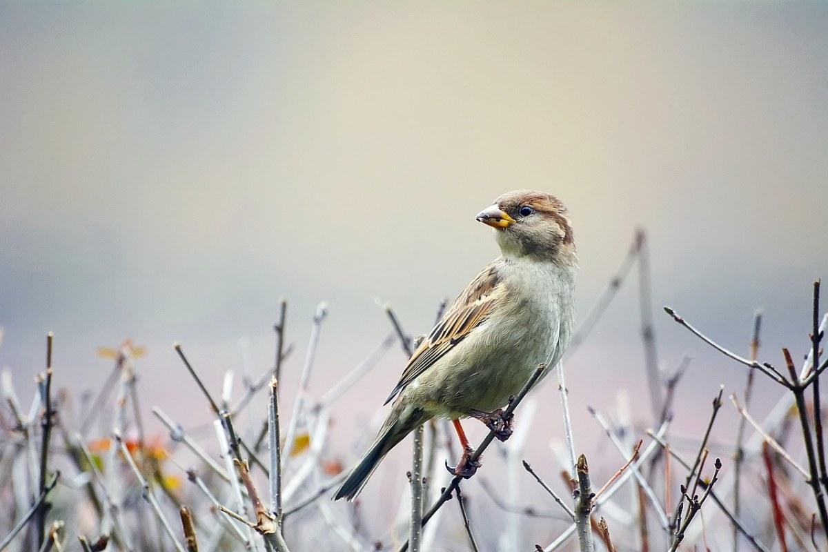 鸟、麻雀、野生动物