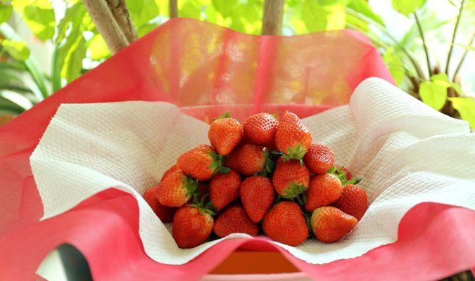 草莓、红色、性质