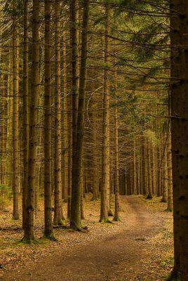森林中的道路