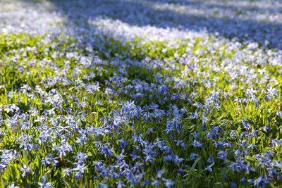 阳光下绽放的野花花朵