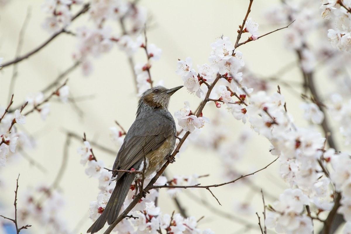 春天鸟语花香