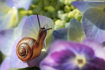 花上的蜗牛