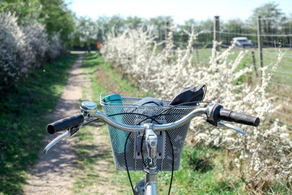 骑着自行车去踏春的图片