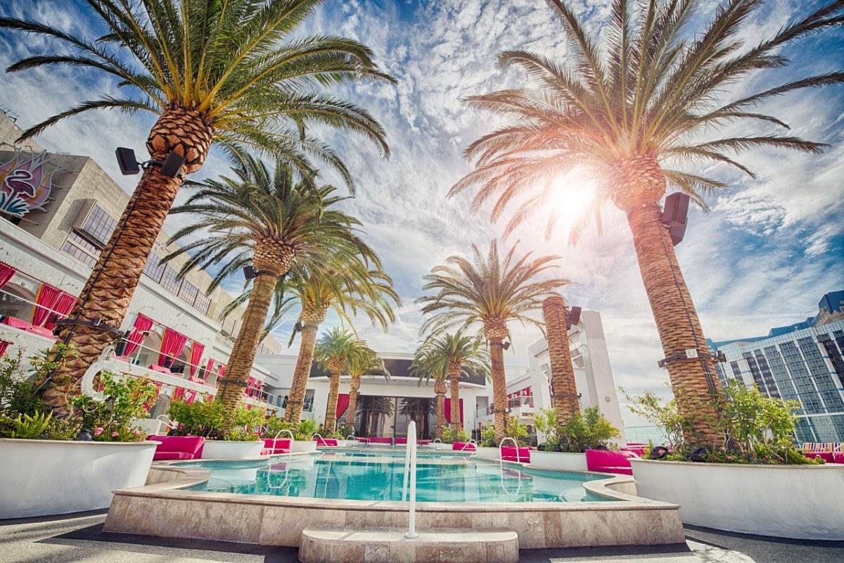 酒店的露天游泳池与海枣树