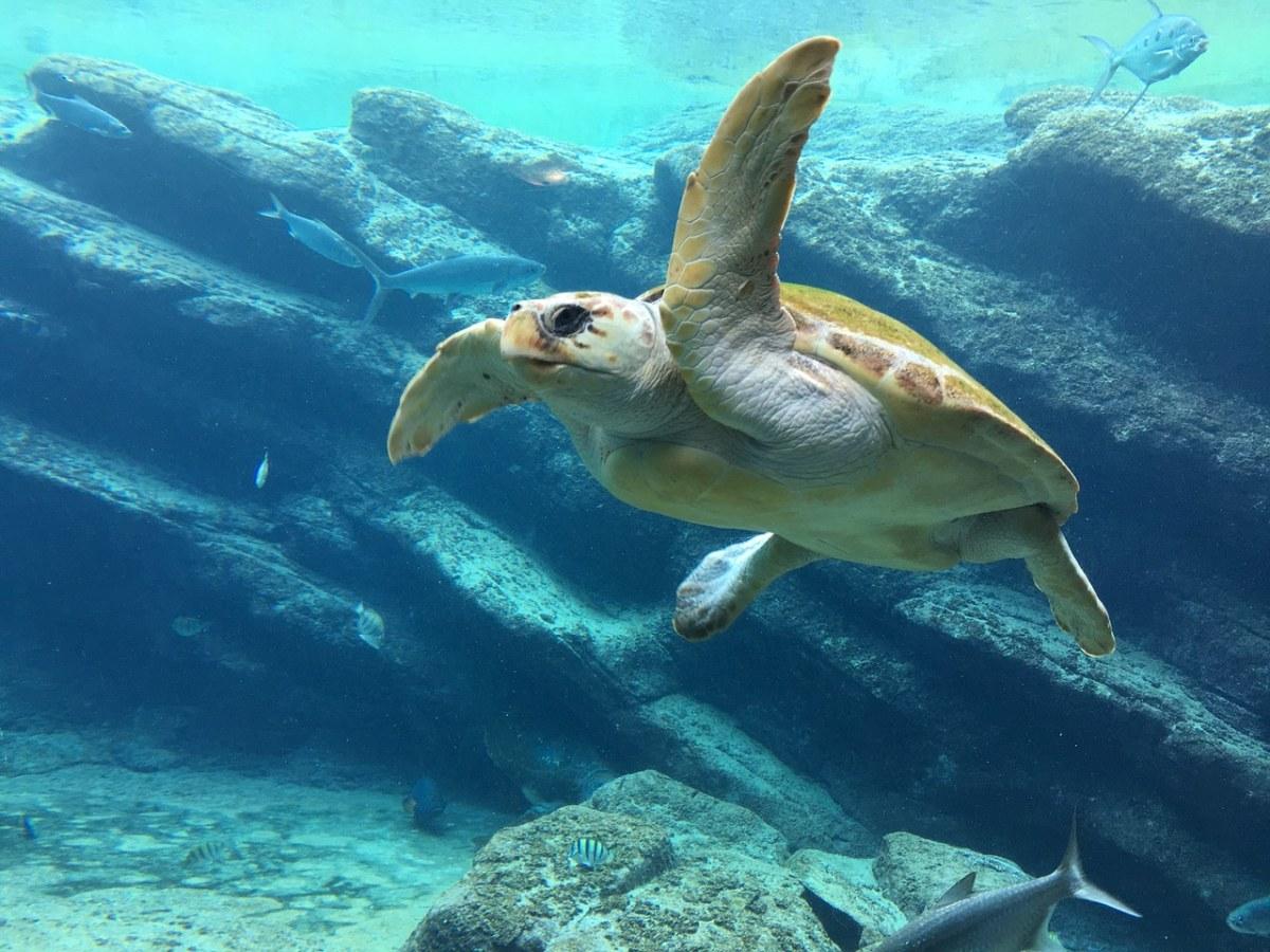 水下的海龟