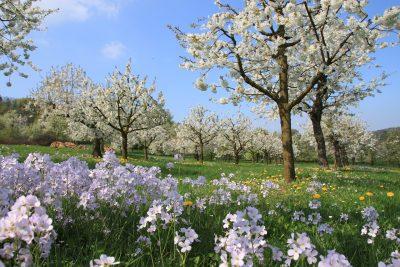 春暖花开的果园风景图片