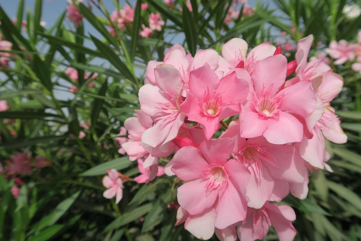 花卉、植物、花园