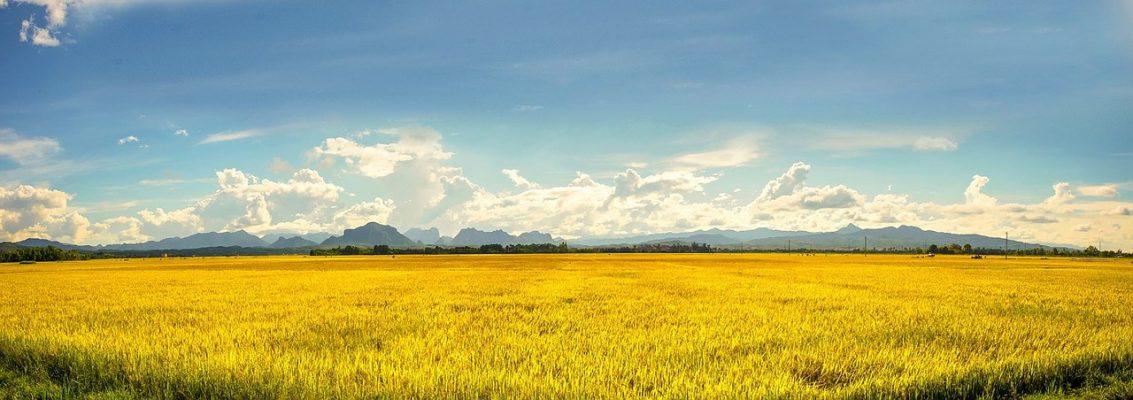 越南、农业、农场