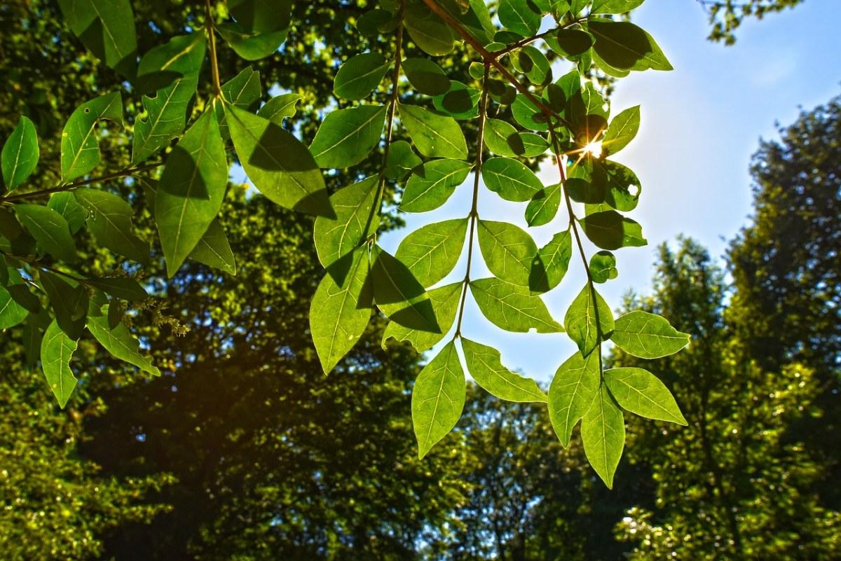 树、枝杈、叶子