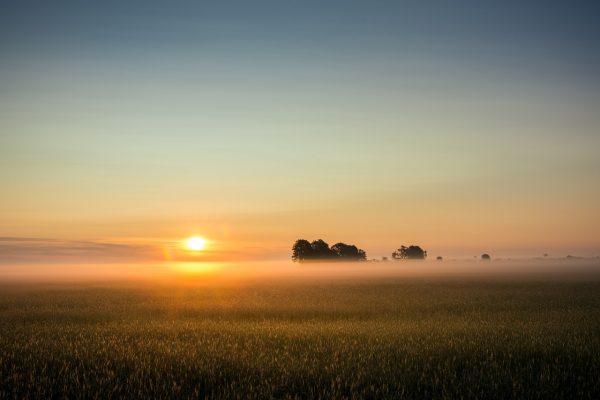 日出、雾、雾银行
