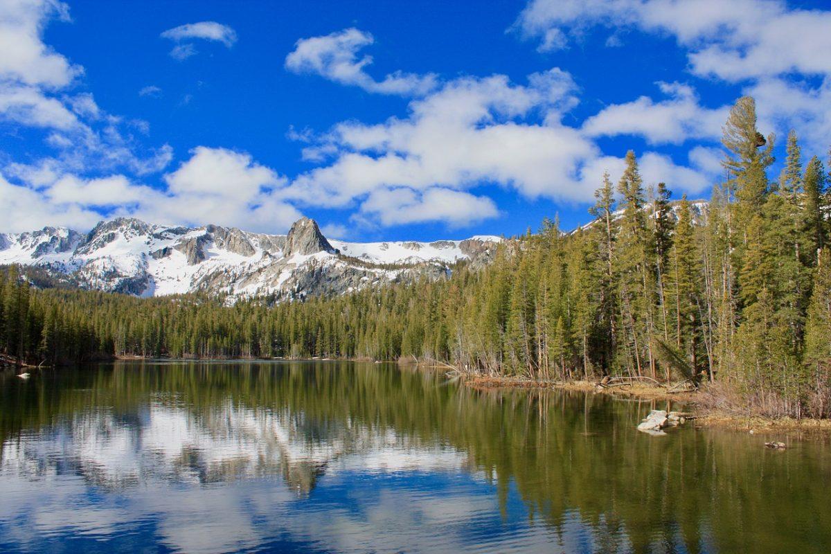 湖泊岸边的树林