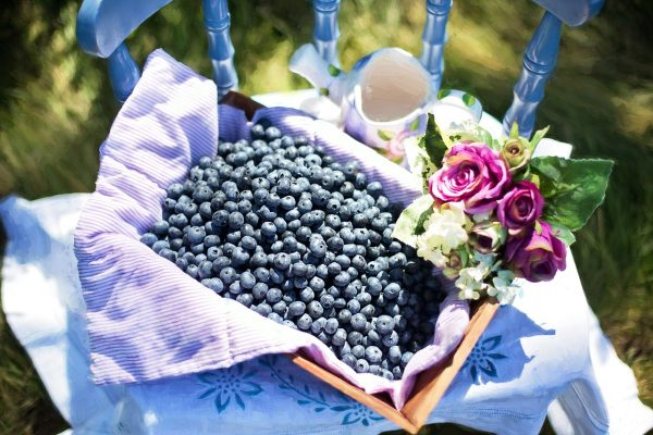 阳光下的蓝莓与花束