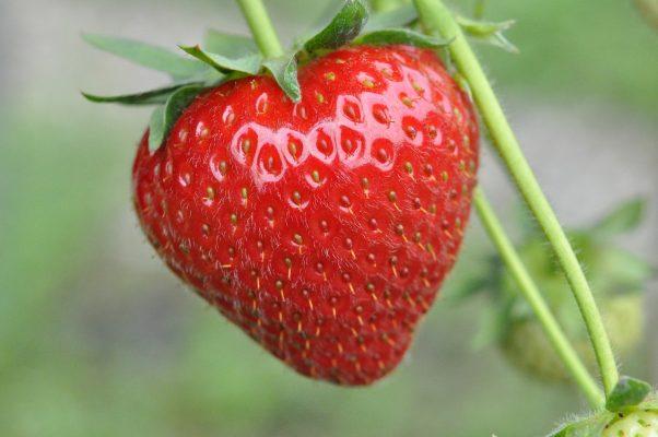 草莓、水果、食品