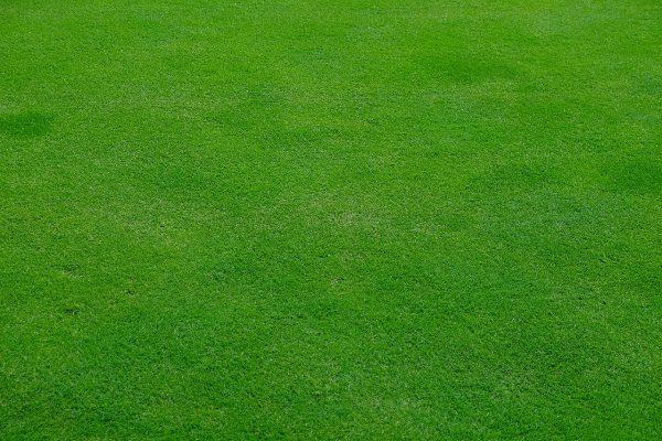 绿色的草坪背景
