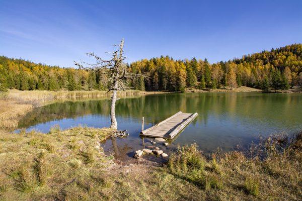 湖泊与湖岸的树林植被风景
