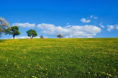 春天草地风景图片