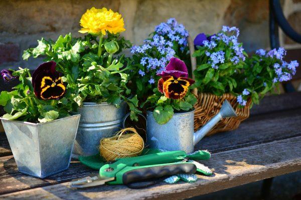 花园里的工具与盆栽