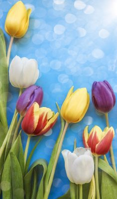 郁金香、花、自然