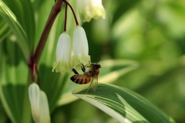 春天蜜蜂采花