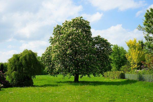 春天花园草地上的树