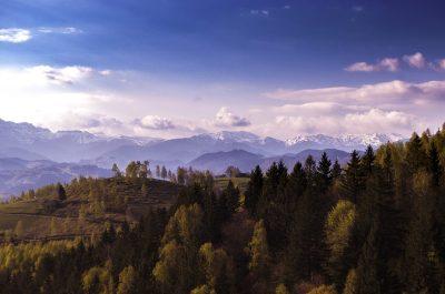 群山与树林风景