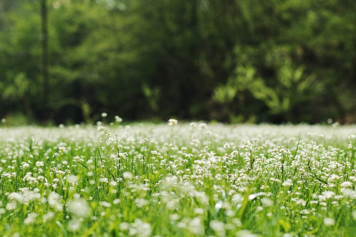 春天草地上的野花