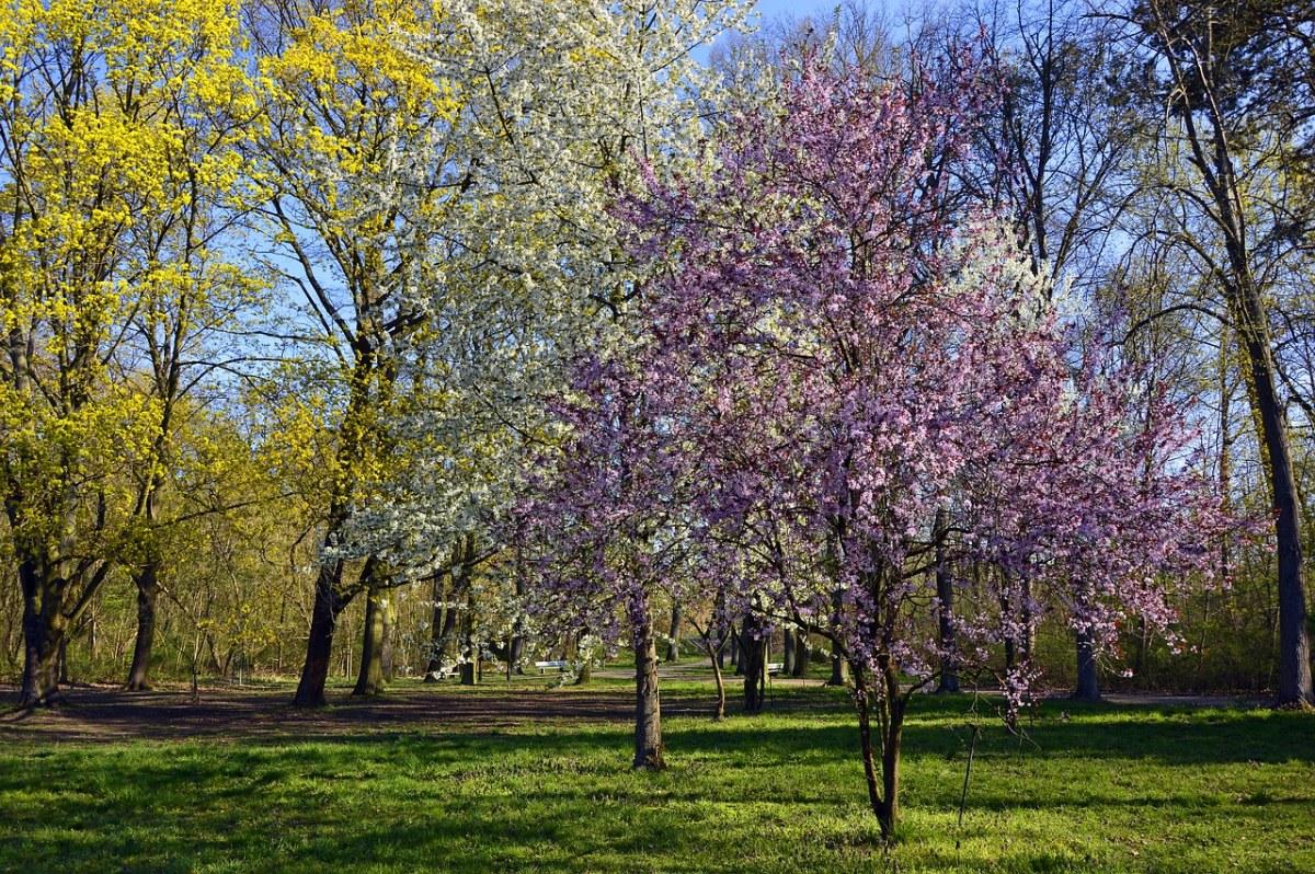 阳光照射下春天的树林