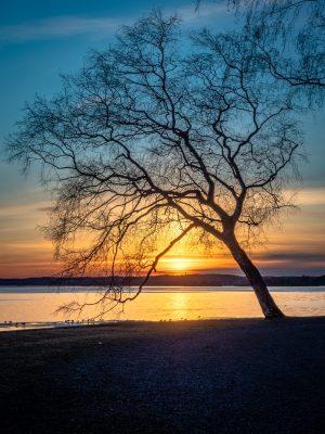 湖岸的树剪影与日落景观