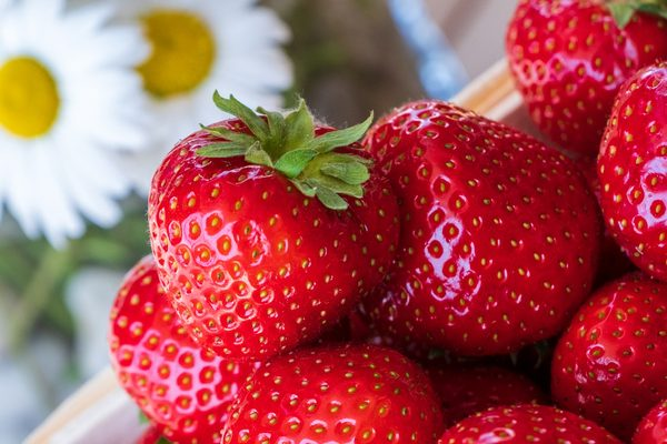 草莓、红色、水果