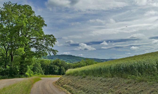 田园道路与树