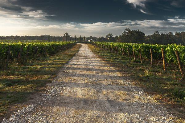 葡萄园的道路