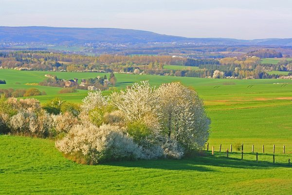 平原农村春天的风景